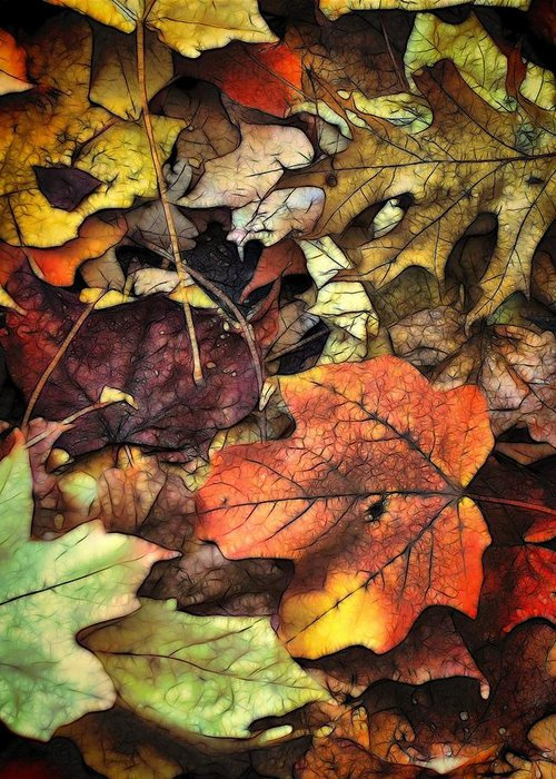 Leaf Greeting Card featuring the photograph Fall Colors by Lyle Hatch