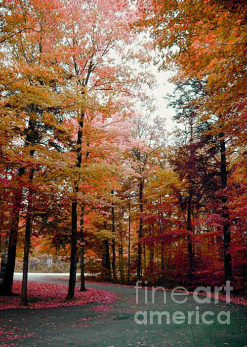 Fall Greeting Card featuring the photograph Fall Colors by Michael Creamer