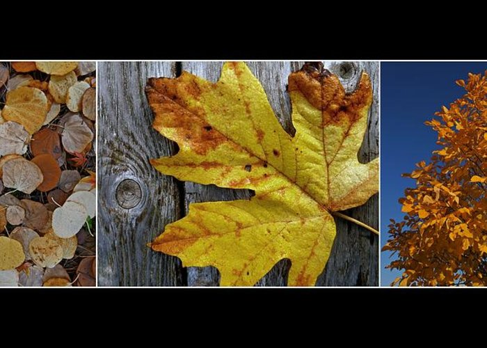Autumn Greeting Card featuring the photograph Fall Colors Triptych by Patricia Strand