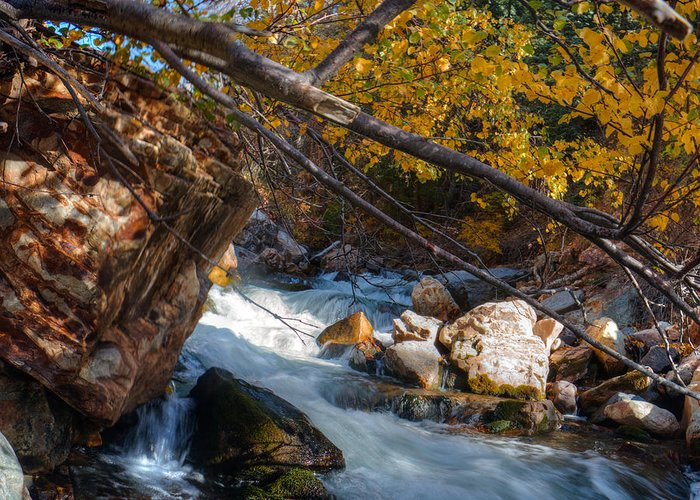 Water Greeting Card featuring the photograph Fall Cottonwood I by Tom Stonehocker