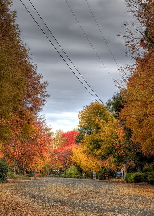 Fall Greeting Card featuring the photograph Fall Drive by Ren Alber