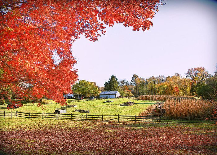 Fall Colors Greeting Card featuring the photograph Fall Farm by Sheryl Bergman