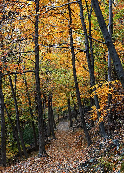 Autumn Greeting Card featuring the photograph Fall Foliage Colors 03 by Metro DC Photography