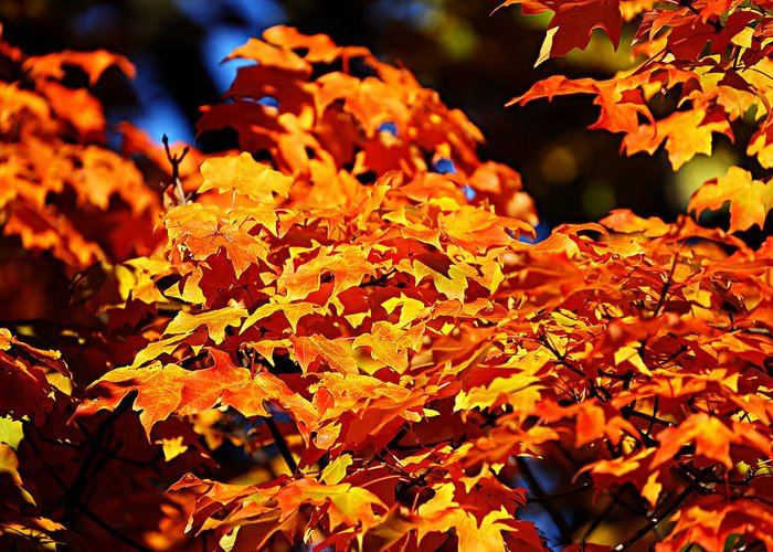 Autumn Greeting Card featuring the photograph Fall Foliage Colors 16 by Metro DC Photography