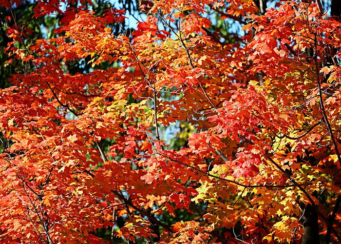 Metro Greeting Card featuring the photograph Fall Foliage Colors 22 by Metro DC Photography