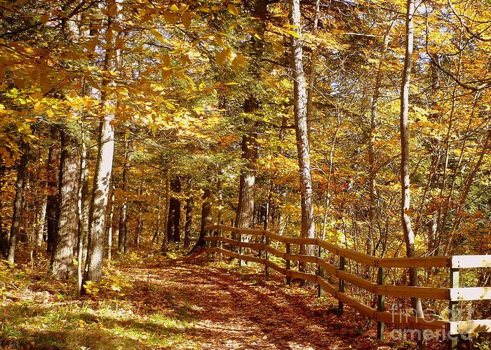 Fall Greeting Card featuring the photograph Fall In Michigan by Eclectic Captures