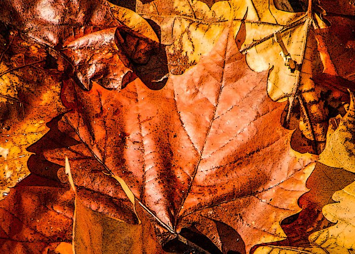 Fall Greeting Card featuring the photograph Fall Leaves by Grace Grogan