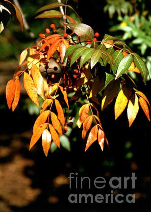 Fall Color Greeting Card featuring the photograph Fall Leaves by Kathy McClure