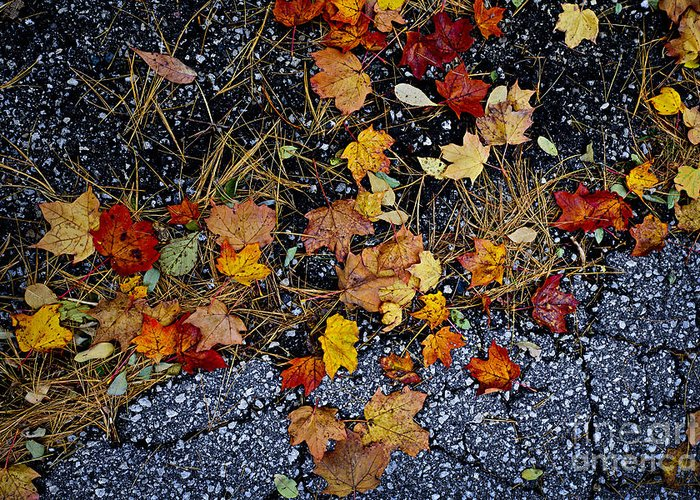 Leaves Greeting Card featuring the photograph Fall Leaves On Pavement by Elena Elisseeva