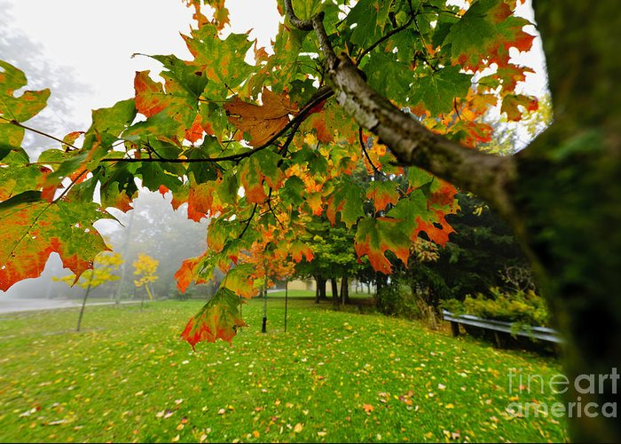 Maple Greeting Card featuring the photograph Fall Maple Tree In Foggy Park by Elena Elisseeva