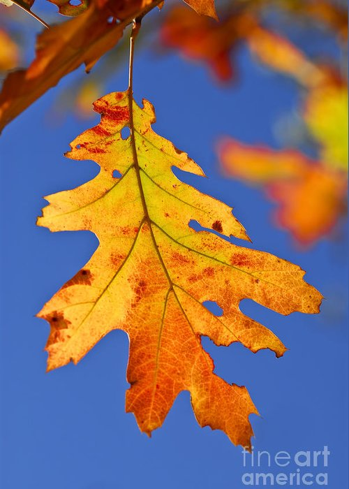 Autumn Greeting Card featuring the photograph Fall Oak Leaf by Elena Elisseeva