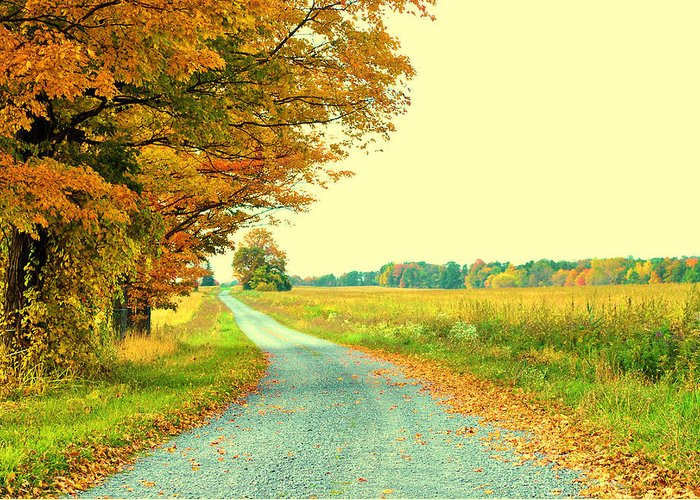 Fall Greeting Card featuring the photograph Fall Path by Caleb Filer