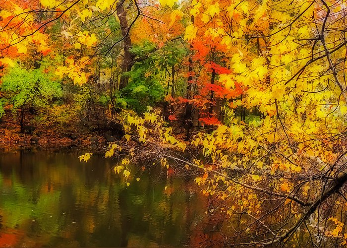 Nature Greeting Card featuring the photograph Fall Reflection by Robert Mitchell