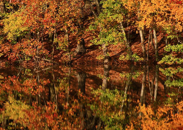 Autumn Greeting Card featuring the photograph Fall Reflections by Karol Livote