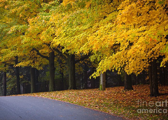 Fall Greeting Card featuring the photograph Fall Road And Trees by Elena Elisseeva