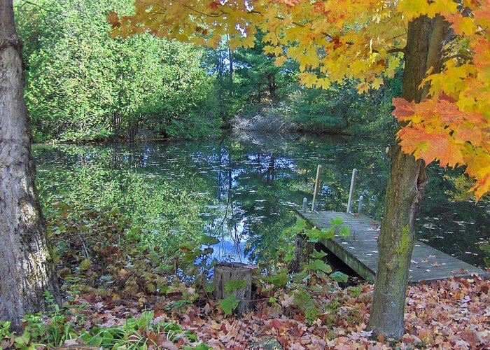 Fall Greeting Card featuring the photograph Fall Scene By Pond by Brenda Brown