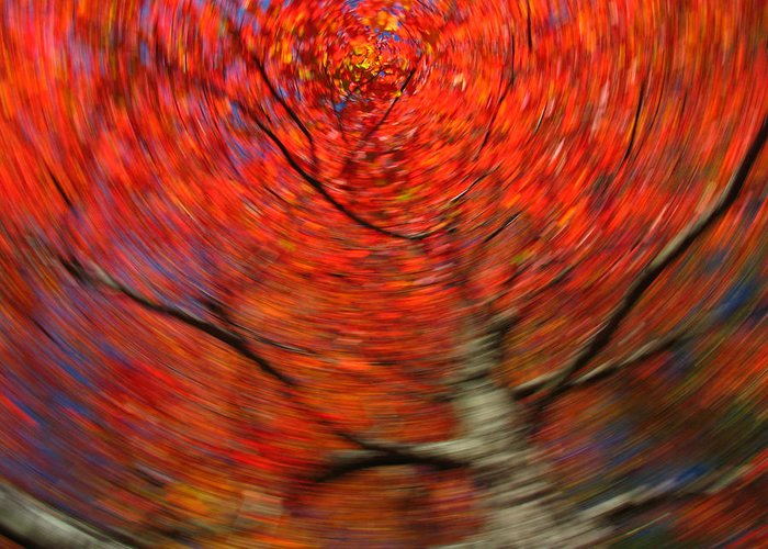 Intentional Camera Movement Greeting Card featuring the photograph Fall Tree Carousel by Juergen Roth