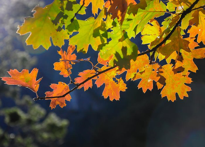 Greeting Card featuring the photograph Fall by Tyler Kaufman