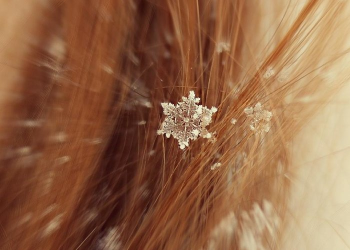 Winter Greeting Card featuring the photograph Fallen Flake by Candice Trimble