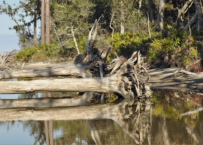 Beach Photographs Greeting Card featuring the photograph Fallen Trees Reflected In A Beach Tidal Pool by Bruce Gourley