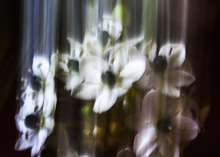 Flowers Greeting Card featuring the photograph Falling Flowers by Anne Van der Laan