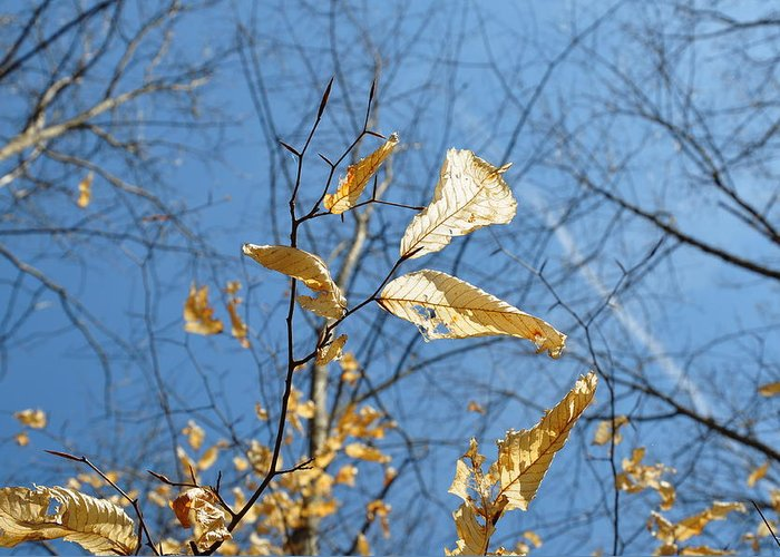 Falling Leaves Autumn Blue Sky Abstract Tree Branches Decoration Photo Nature On The Trail Feeling Lonely Greeting Card featuring the photograph Falling Leaves by Sunny Phillips