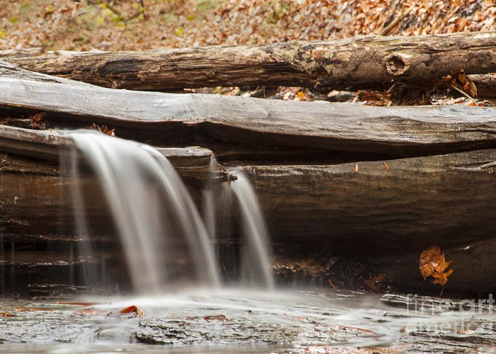 Waterfall Greeting Card featuring the photograph Falls Through A Tree by Darleen Stry