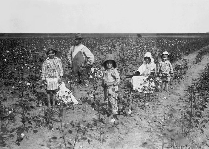 Sharecroppers Greeting Cards