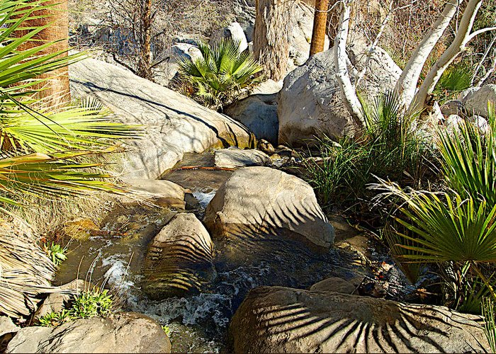 Fan Palm Leaves And Shadows Over Andreas Creek Rocks In Indian Canyons Greeting Card featuring the photograph Fan Palm Leaves And Shadows Over Andreas Creek Rocks In Indian Canyons-ca by Ruth Hager