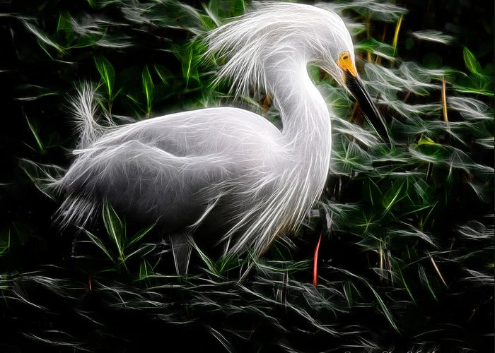 Egret Greeting Card featuring the photograph Fancy Feathers by Lucy VanSwearingen