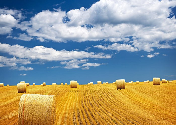 Agriculture Greeting Card featuring the photograph Farm Field With Hay Bales by Elena Elisseeva