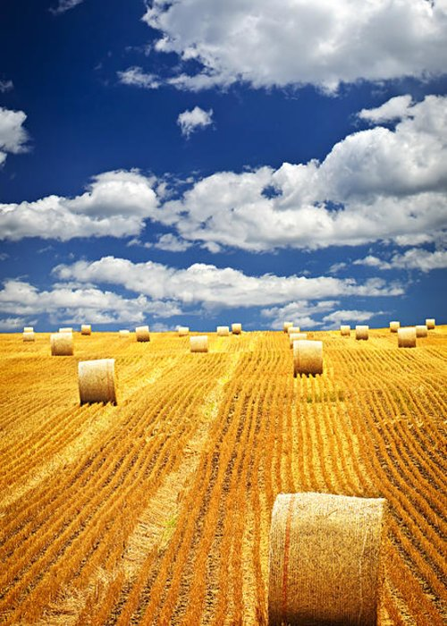 Agriculture Greeting Card featuring the photograph Farm Field With Hay Bales In Saskatchewan by Elena Elisseeva