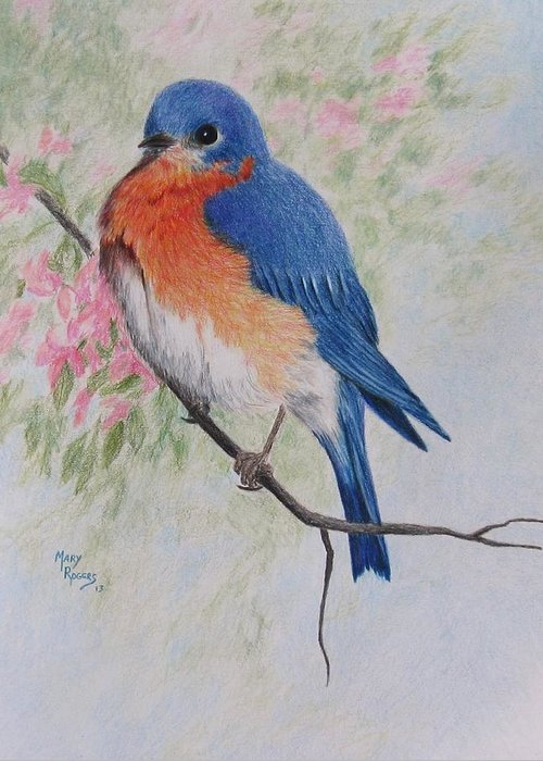 Fat and fluffy bluebird greeting card for sale by mary rogers nature greeting card featuring the drawing fat and fluffy bluebird by mary rogers m4hsunfo