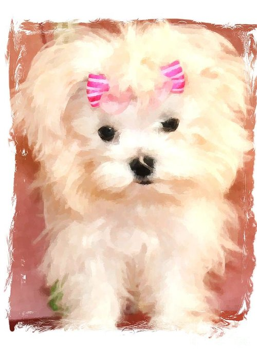 Maltese Greeting Card featuring the photograph Faux Maltese Bella by Margaret Newcomb