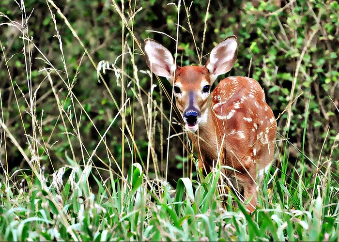 A Whitetail Fawn Hiding In The Tall Grass. Greeting Card featuring the photograph Fawn In The Grass by Marty Koch