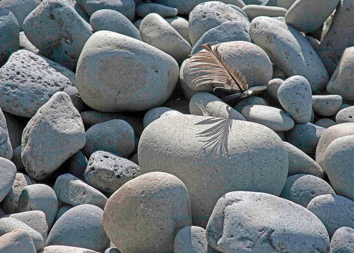 Feather Greeting Card featuring the photograph Feather And Cobbles by Jim Young
