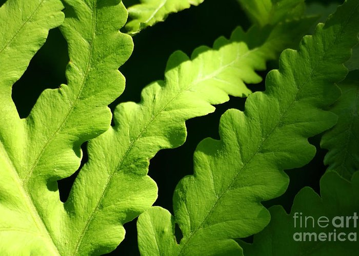 Abstract Greeting Card featuring the photograph Fern In Sunlight by Sandra Cunningham