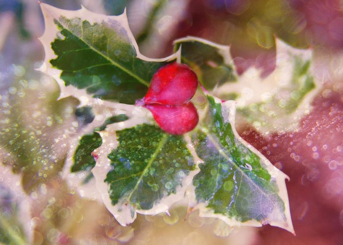 Holly Greeting Card featuring the photograph Festive Holly by Vanessa Thomas