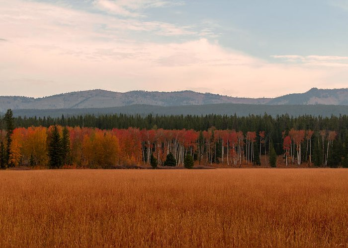 Sky Greeting Card featuring the photograph Field In Yellowstone by Sal Terrazas