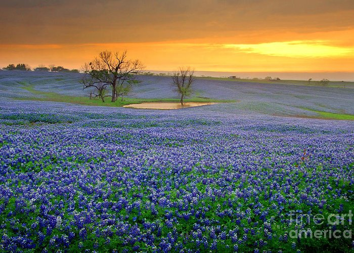 Texas Bluebonnets Greeting Card featuring the photograph Field Of Dreams Texas Sunset - Texas Bluebonnet Wildflowers Landscape Flowers by Jon Holiday