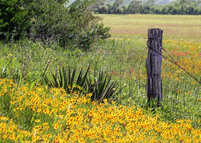 Fence Greeting Card featuring the photograph Field Of Flowers by Leticia Latocki