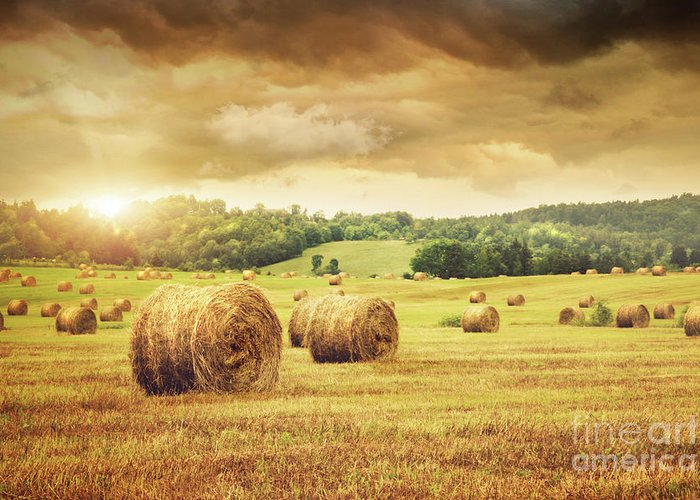 Agricultural Greeting Card featuring the photograph Field Of Freshly Bales Of Hay With Beautiful Sunset by Sandra Cunningham