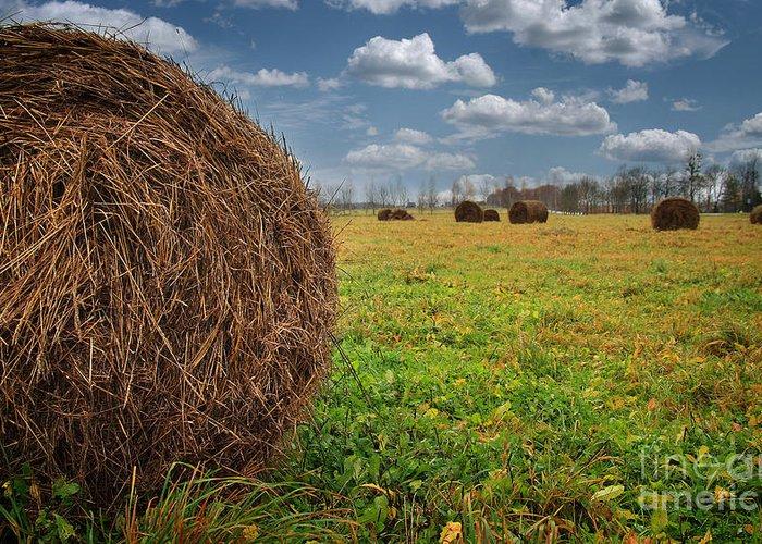 Field Of Haystacks Greeting Card featuring the photograph Field Of Haystacks by Jolanta Meskauskiene