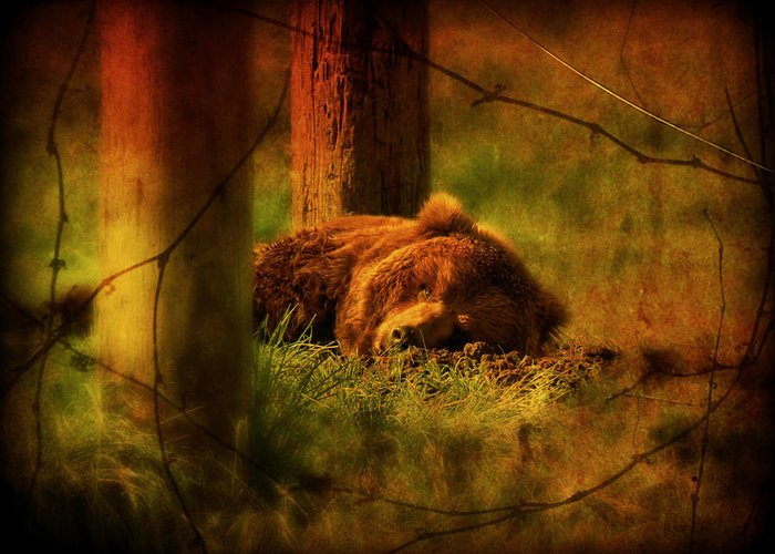 Bear Greeting Card featuring the photograph Fiercely Tired by Micki Findlay