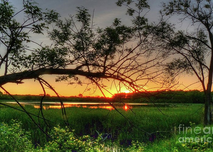 Sunset Greeting Card featuring the photograph Fiery Swamp Sunset by Deborah Smolinske