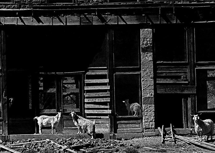 Film Homage King Vidor  Billy The Kid 1930 Wild Goats Ghost Town Billy The Kid Haunt White Oaks Nm 1968-2008 Black And White Greeting Card featuring the photograph Film Homage King Vidor  Billy The Kid 1930 Wild Goats Ghost Town Billy The Kid Haunt White Oaks Nm by David Lee Guss