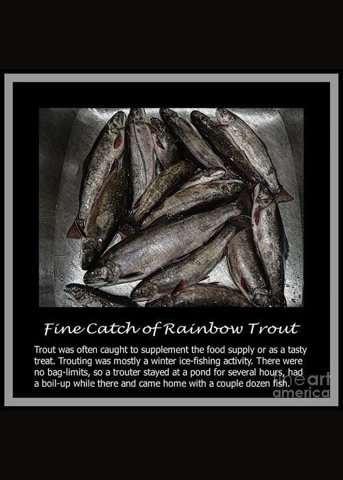 Fine Catch Of Rainbow Trout Greeting Card featuring the photograph Fine Catch Of Rainbow Trout by Barbara Griffin