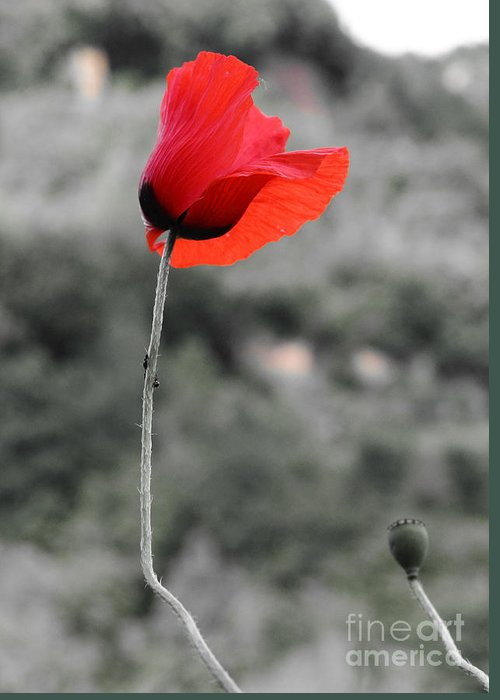 Fiore Greeting Card featuring the photograph Fiore Rosso by Michele Messina
