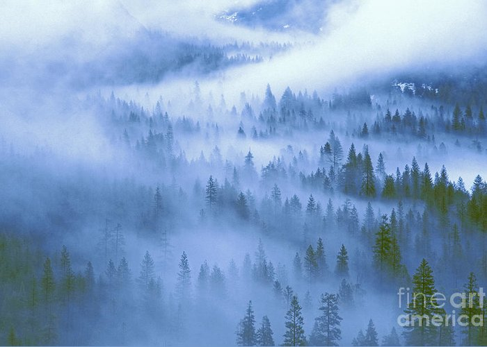 North America Greeting Card featuring the photograph Fir Trees Shrouded In Fog In Yosemite Valley by Dave Welling