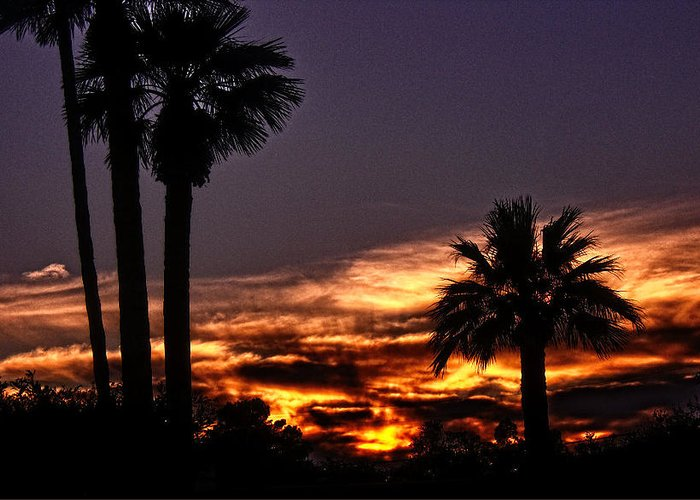 Palm Trees Greeting Card featuring the photograph Fire Haven by Marquis Crumpton